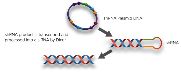 ANGEL1 siRNA (h), shRNA and Lentiviral Particle Gene Silencers